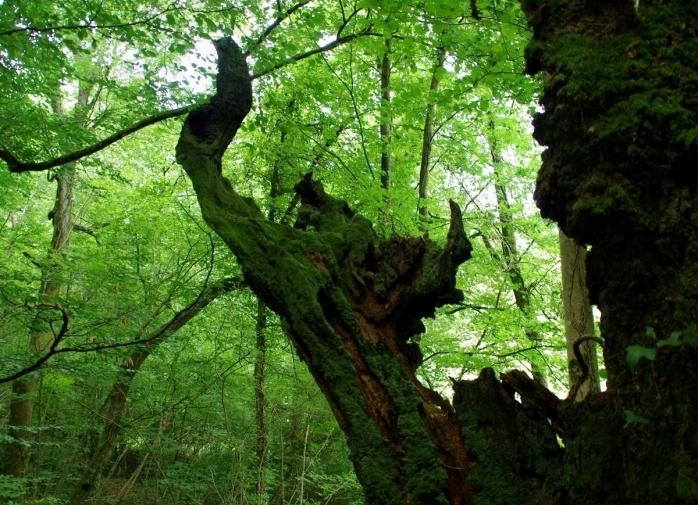 la forêt des sortilèges