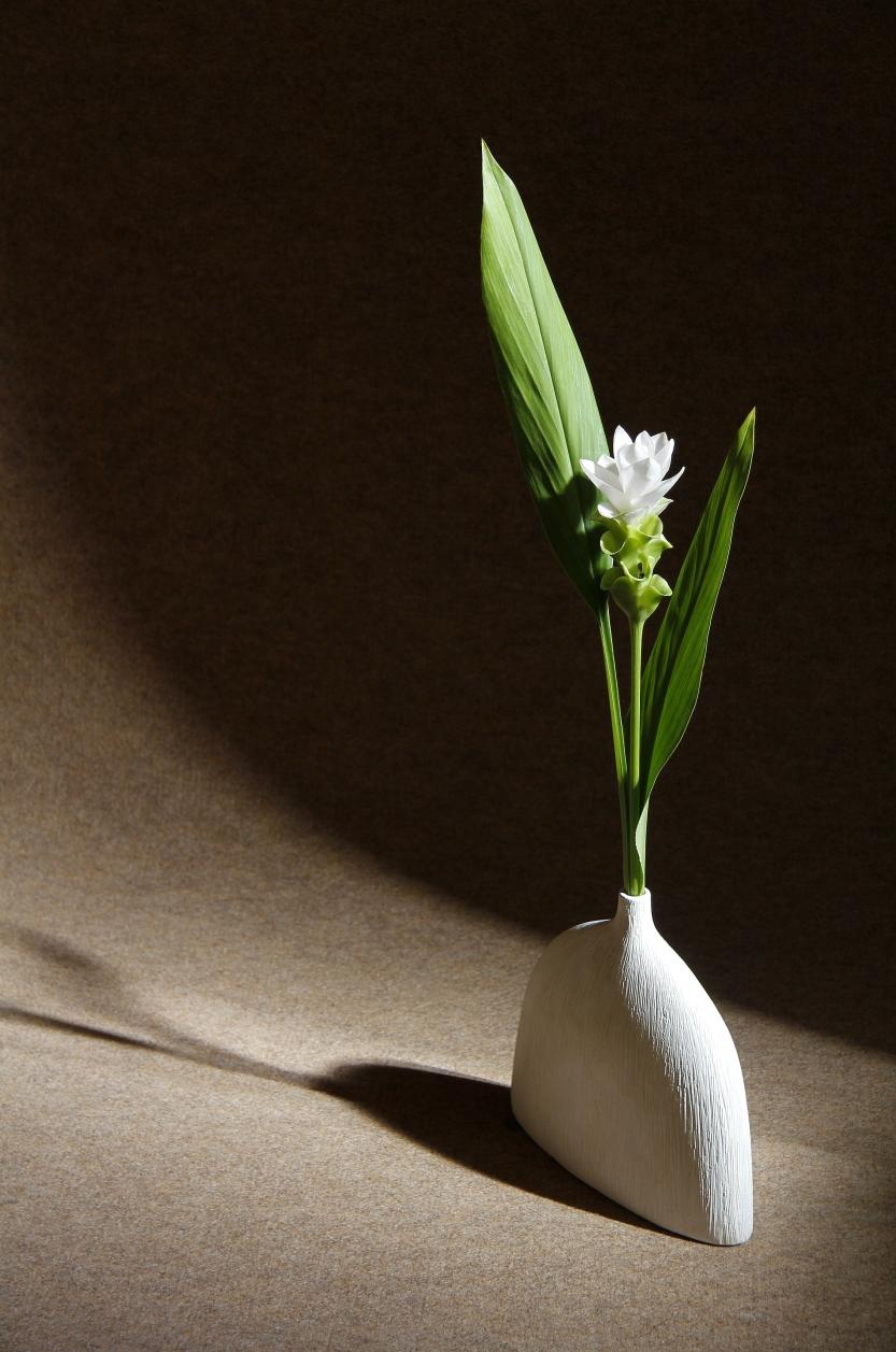 juste une fleur(2)