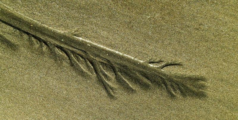 plume de sable